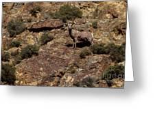The Bighorn Uwe Greeting Card