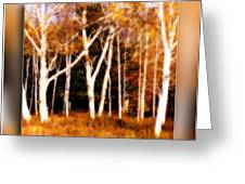 The Birches Greeting Card