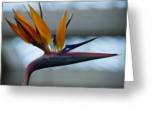 The Bird Of Paradise Greeting Card