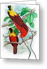 The Birds Of Paradise Greeting Card