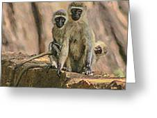 The Black-faced Vervet Monkey Greeting Card