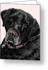 The Black Lab Sweetheart Greeting Card