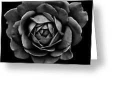 The Black Rose Flower Greeting Card