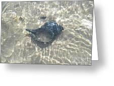 The Black Seashell Greeting Card