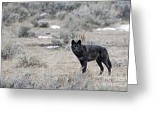 The Black Wolf Greeting Card