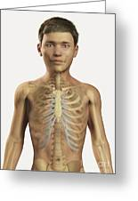 The Bones Within The Body Pre-adolescent Greeting Card