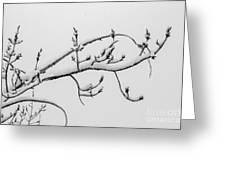 The Branch Of Art Greeting Card
