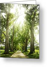 The Bright Path Greeting Card