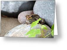 The Bronze Frog Greeting Card