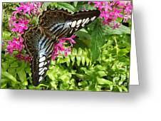 The Brown Clipper Greeting Card