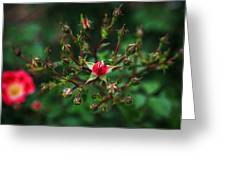 The Bud's For You Greeting Card