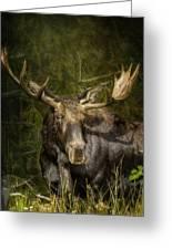 The Bull Moose Greeting Card