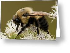 The Bumble Bee.. Greeting Card