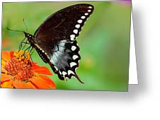 The Butterfly And The Zinnia Greeting Card