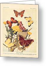 The Butterfly Book Greeting Card