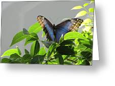 The Butterfly Displaying Its Beauty Greeting Card