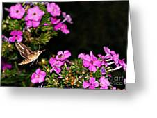 The Butterfly Garden At Night Greeting Card
