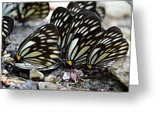 The Butterfly Gathering Greeting Card