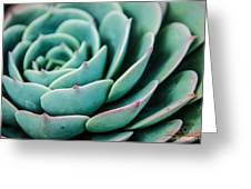 The Cactus Greeting Card