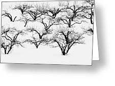 The Calligraphy Of Apple Trees In Winter Greeting Card