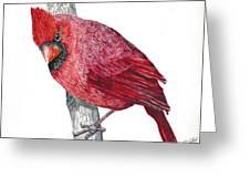 The Cardinal Greeting Card