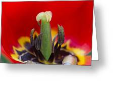 The Center Of Attention Greeting Card