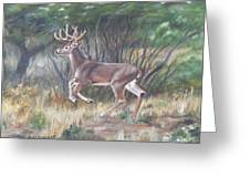 The Chase Is On Greeting Card