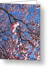 The Cherry Blossons Greeting Card