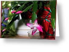 The Christmas Cactus Greeting Card