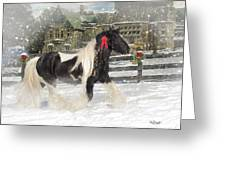 The Christmas Pony Greeting Card by Fran J Scott