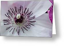 The Clematis Flower Greeting Card