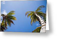 The Coconut Ladder Greeting Card