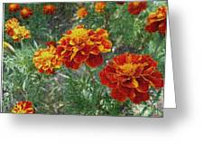 The Color Of Fire Greeting Card