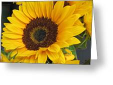 The Color Of Summer - Sunflower Greeting Card