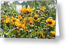 The Color Of Sunshine Greeting Card