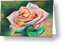 The Colors Of A Rose Greeting Card