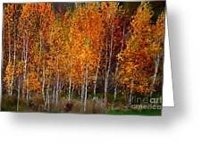 The Colors Of Autumn Greeting Card