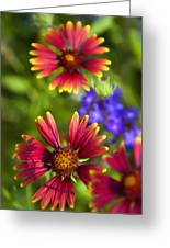 The Colors Of Summer  Greeting Card