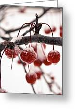 The Colors Of Winter Greeting Card