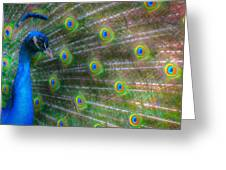 The Colours Of The Peacock Greeting Card