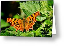 The Comma -- Polygonia C-album Greeting Card