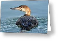 The  Common Loon Greeting Card