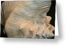 The Conch Greeting Card