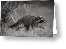 The Coon Walk Greeting Card