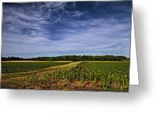 The Corn Fields Of Alabama Greeting Card