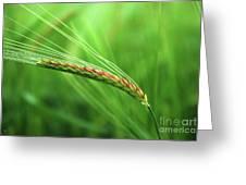 The Corn Greeting Card
