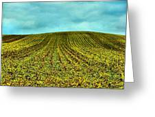 The Corn Rows Greeting Card