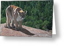 The Cougar 1 Greeting Card