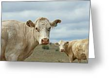 The Cows Greeting Card