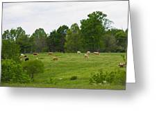 The Cows Of May Greeting Card